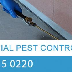View Photo: Commercial Pest Control