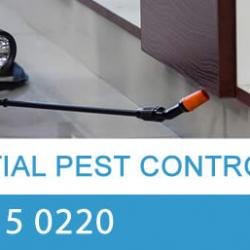 View Photo: Residential Pest Control