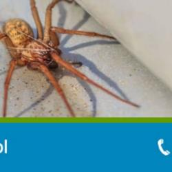 View Photo: Spider Control