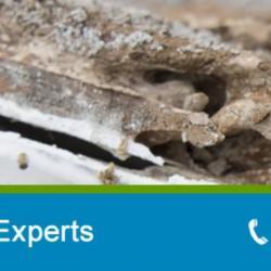 View Photo: Termite Control