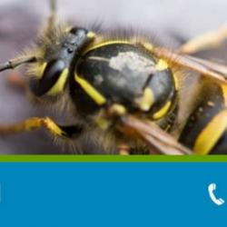View Photo: Wasp Control