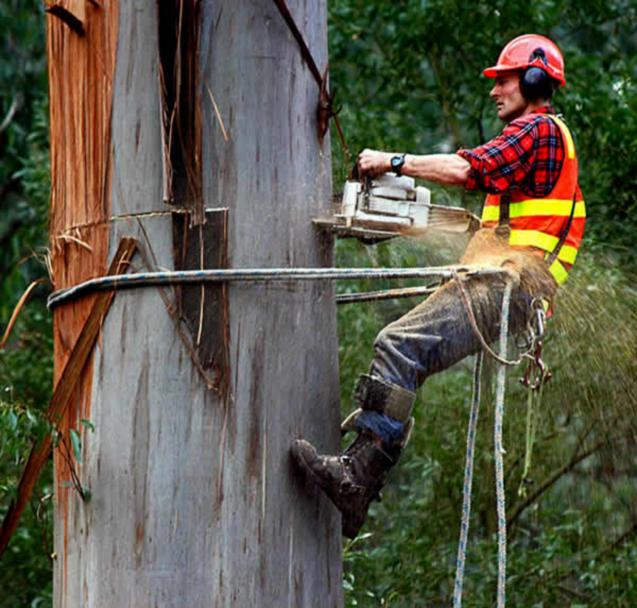 Read Article: Tree Removal Costs in Australia