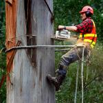 Tree Removal Costs in Australia