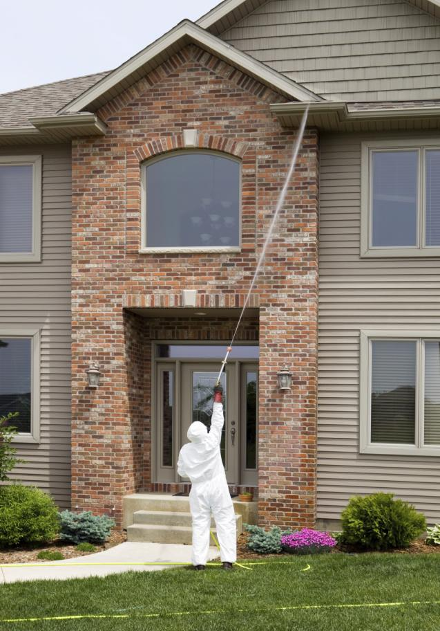 Read Article: Do I need professional pest control service?