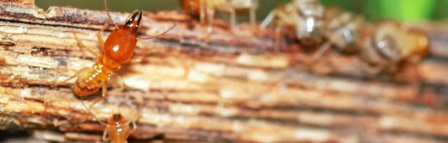 Read Article: With Termites, Prevention means Protection for your family
