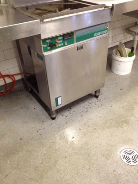 View Photo: Cockroaches in Commercial Kitchen