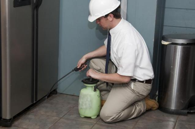 View Photo: Domestic Pest Control
