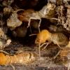Termite Control Solutions