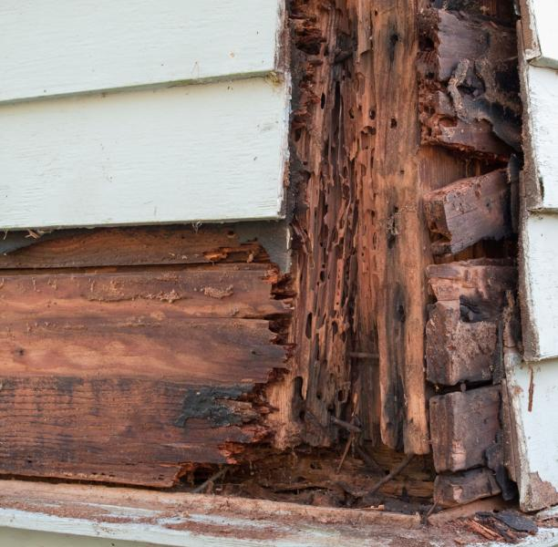 View Photo: Termite Damage