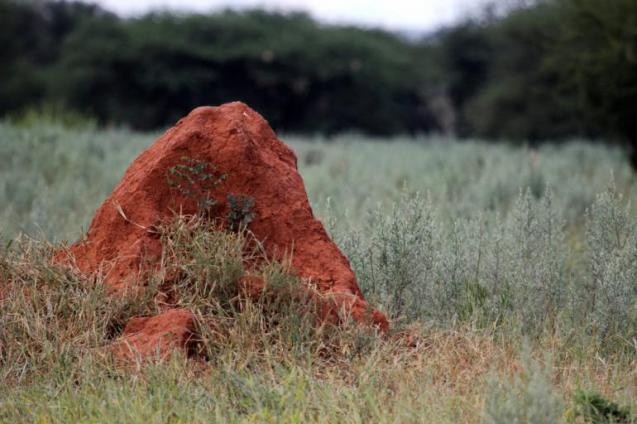 View Photo: Termite Hill
