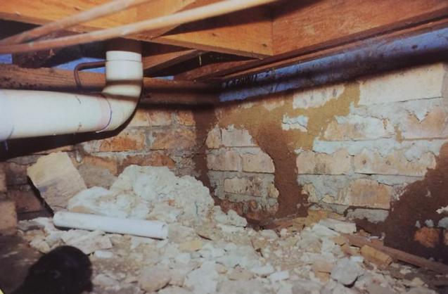 View Photo: Termite Leads