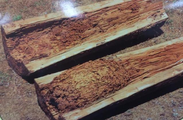 View Photo: Termite Nest