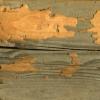 Termites Mud