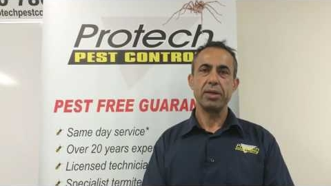 Watch Video : Call us for wasp removal in Melbourne If heavy wasp infestation