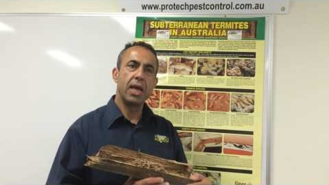 Watch Video : Get a complete solutions of termites infestation in Melbourne