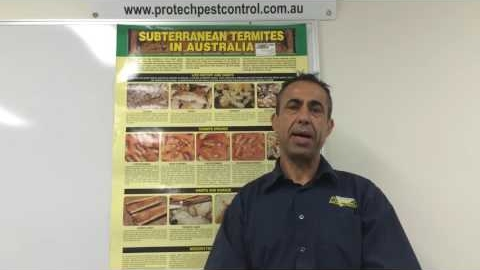 Watch Video : How to Detect Sign of Termite in your home and Get a rid of them