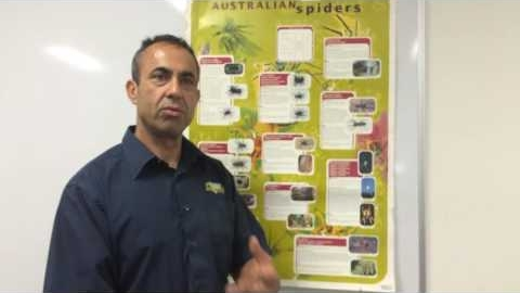 Watch Video : How to identify the Australian spiders living in your home?
