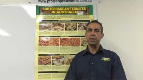 Watch Video : Signs of Termites Damage - Protech Pest Control