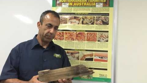 Watch Video : Termites Inspection  How do I know if there is a termite in my home?