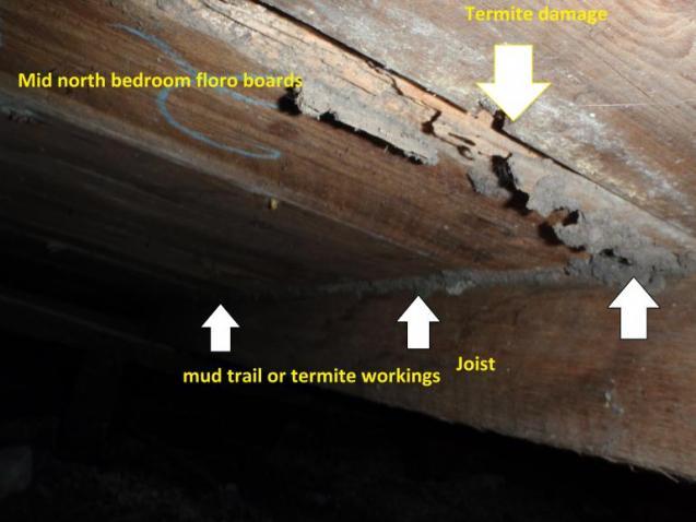 View Photo: Termites