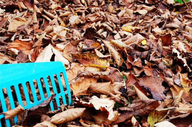 Autumn Garden Care Basics You Shouldn't Forget