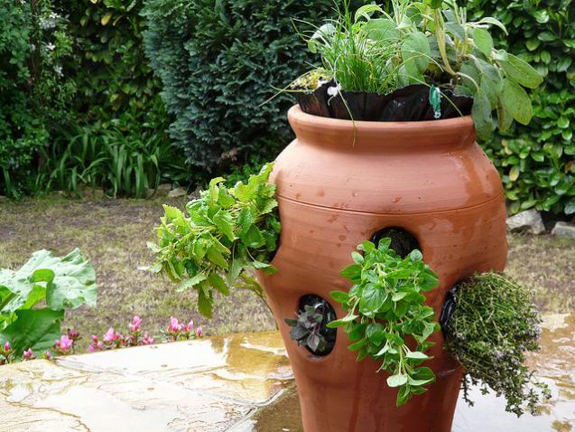 Выращивание уличных растений в горшках 47