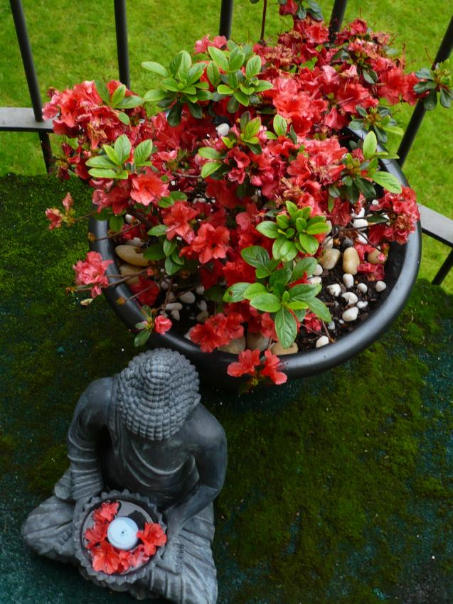 Let the Colour Wheel Turn Your Garden from Boring to Beautiful