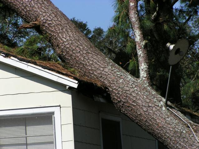 Read Article: 4 Signs That a Tree Needs to be Removed