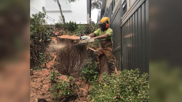 Read Article: How Much Does it Cost to Remove a Tree in Sydney