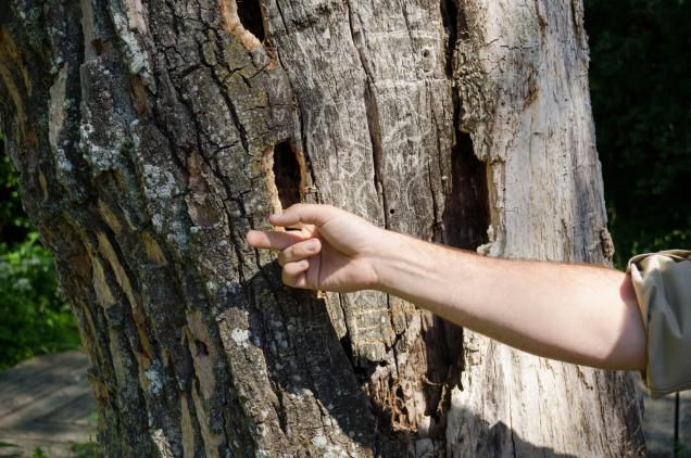Read Article: How to Spot a Dangerous Tree