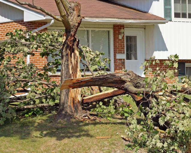View: Steps to Remove a Dangerous Tree