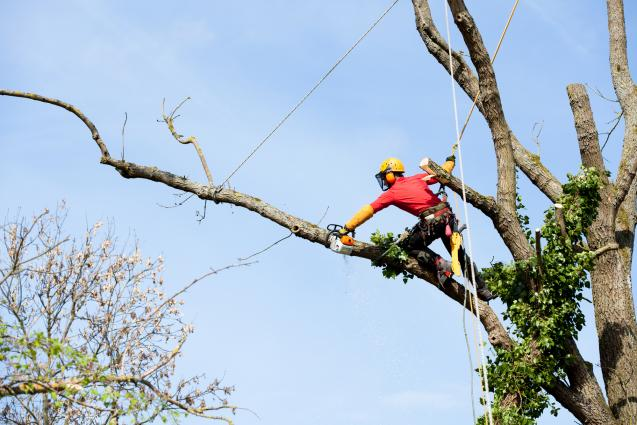Read Article: Tree Removal Regulations in Sydney's Eastern Suburbs