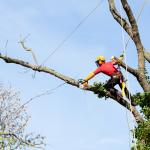Tree Removal Regulations in Sydney's Eastern Suburbs