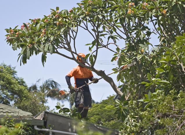 Read Article: Tree Removal Regulations in Waverley