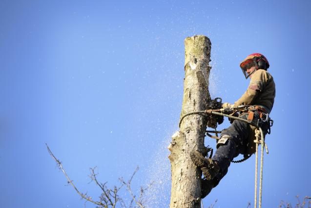 Read Article: Tree Removal Regulations Randwick Property Owners Must Know