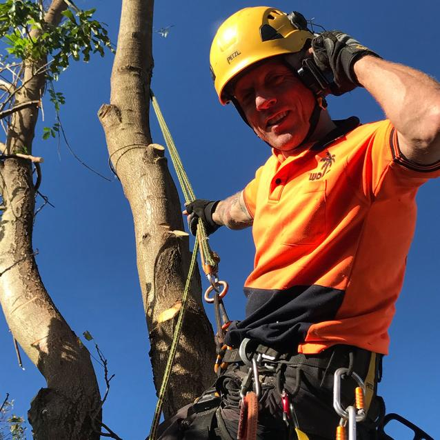 Read Article: Tree Removal Regulations Waverley Council