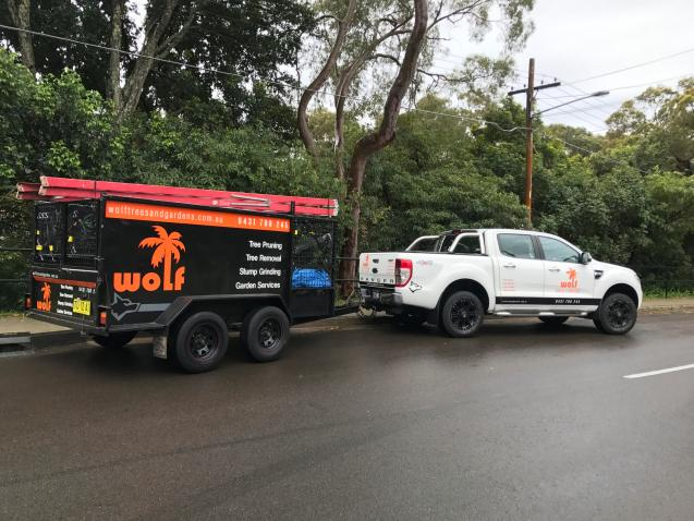 Read Article: Tree Removal Services in Sutherland Shire