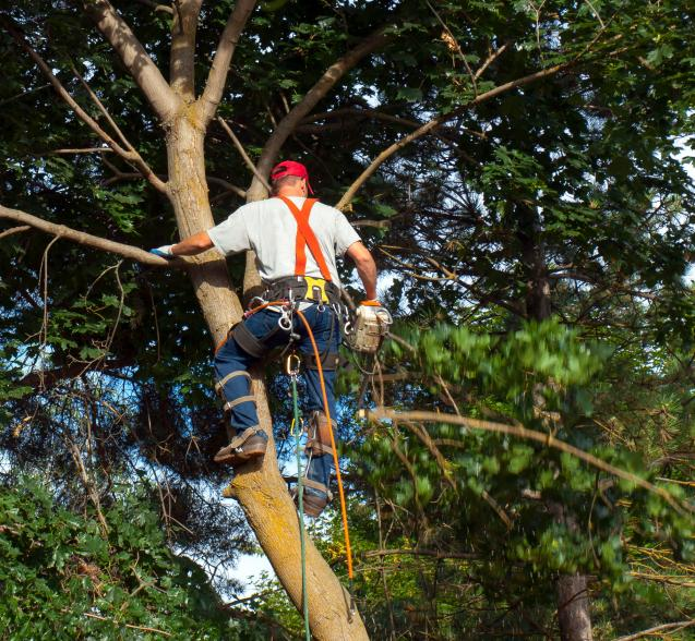 Read Article: Wolf Trees and Gardens Guide to Tree Removal In Woollahra